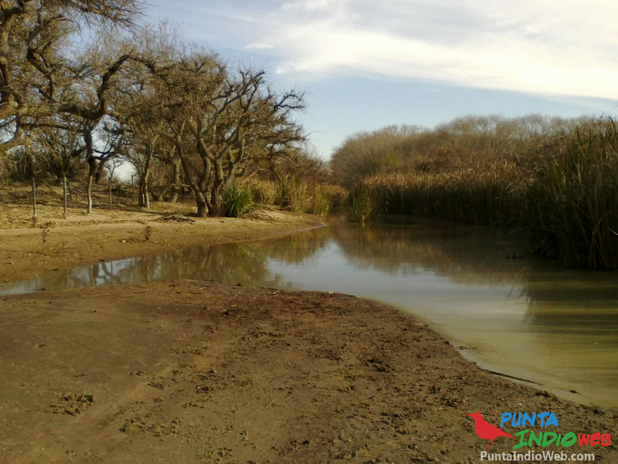 Humedal del Parque Costero del Sur, El Sarandi
