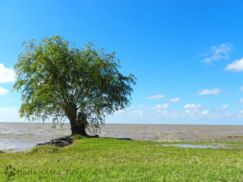 Arbol a la orilla del Rio de la Plata