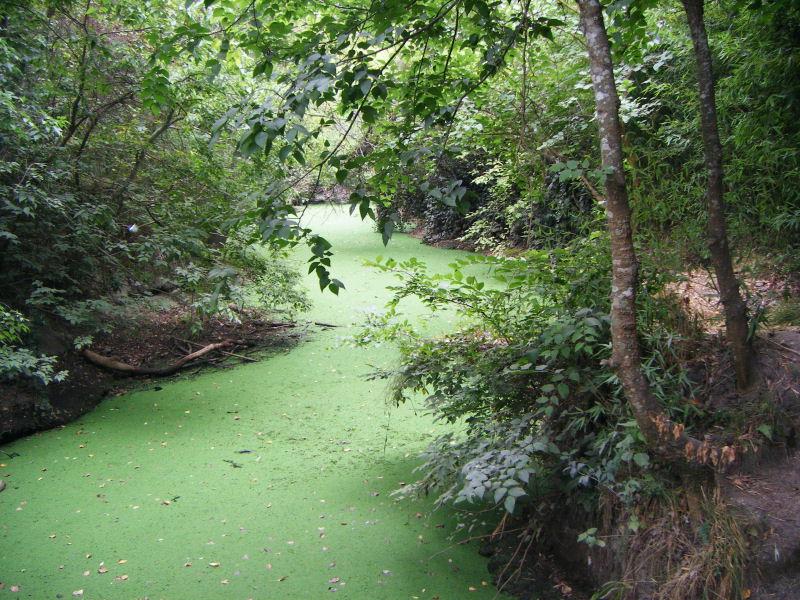 Arroyo Lenteja de agua