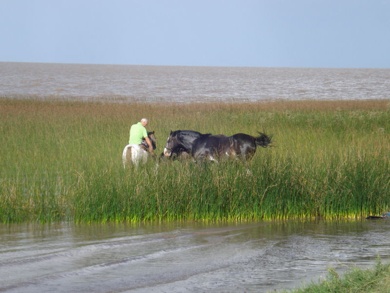 Caballos en el rio enviada por Marcela Sorrentino