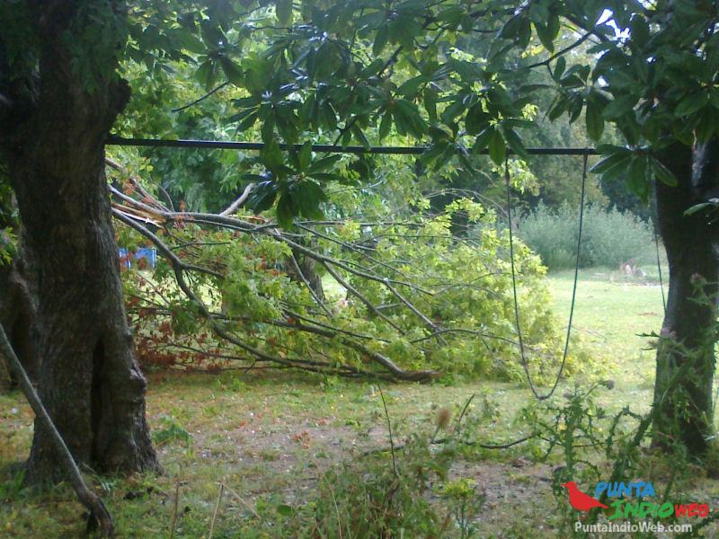 03 rama caida