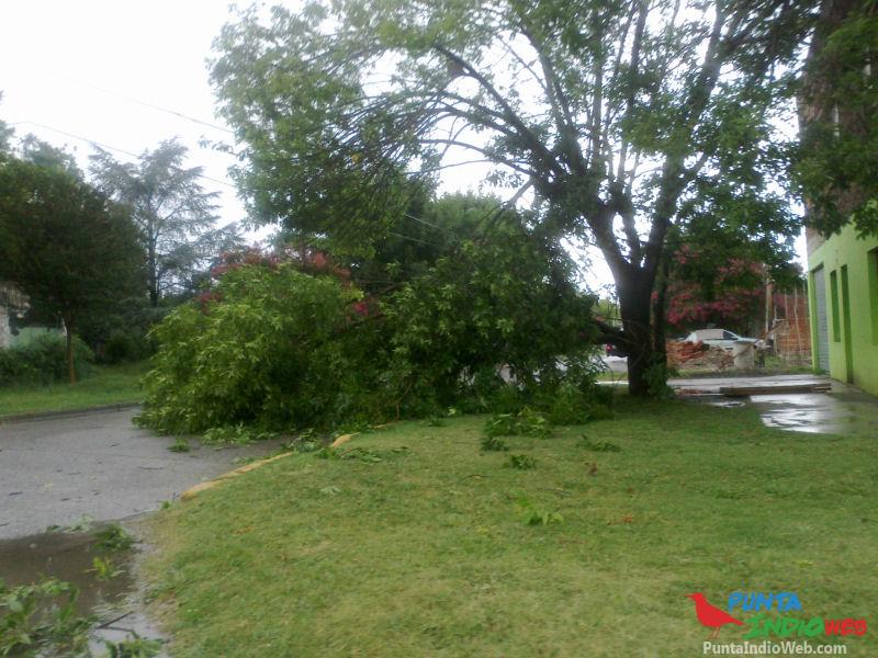 06 arbol caido sobre la calle