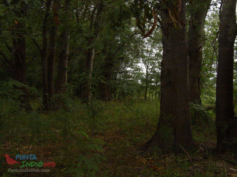 bosque rio samborombon