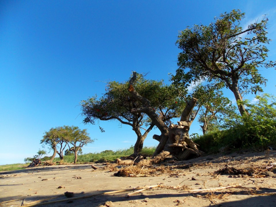 ceibos en la costa por Marie Aran