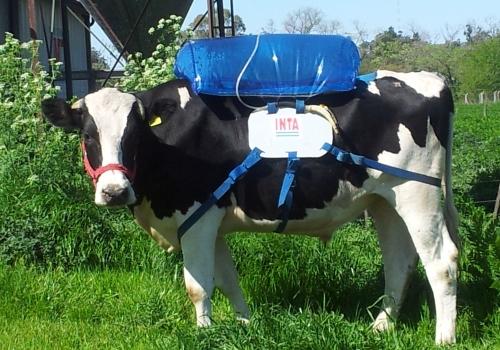 vaca inta biogas
