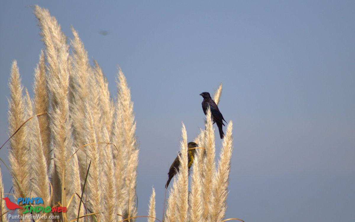 Aves Bahia de Samborombon