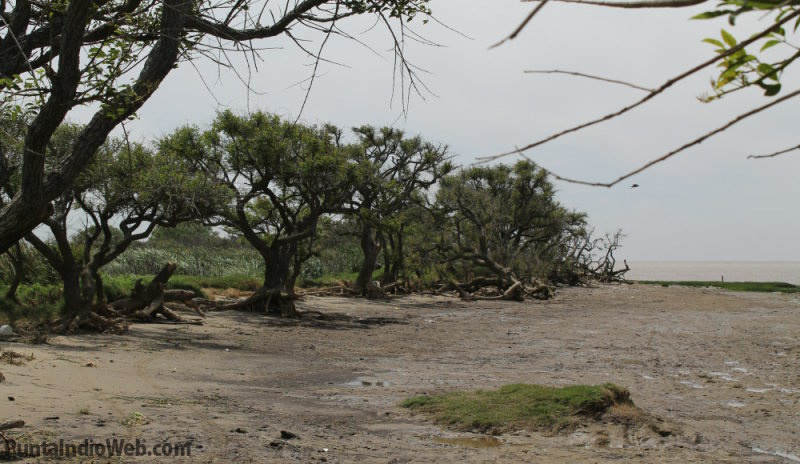parque costero del sur