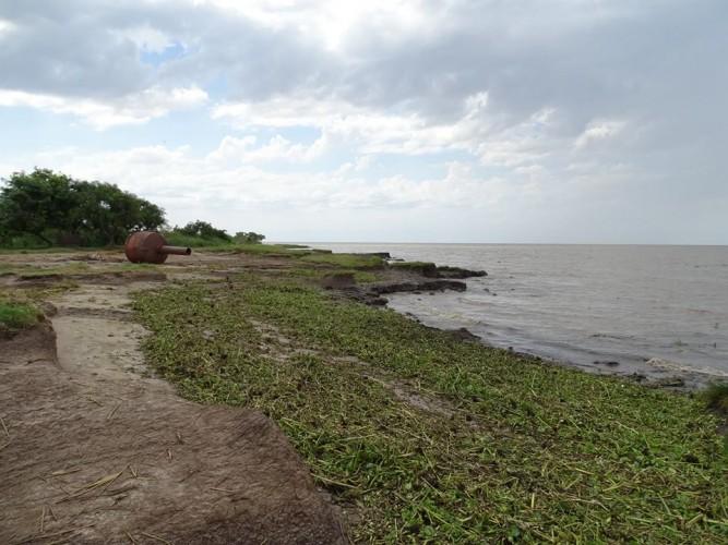 camalotes playa punta indio foto pablo laiolo
