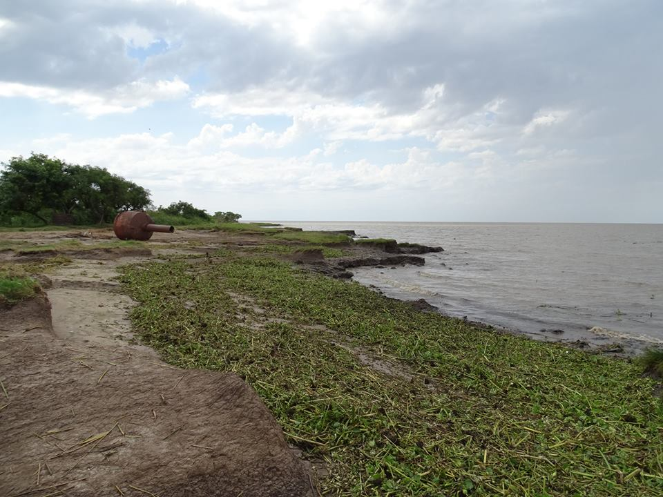 Llegaron los camalotes a Punta Indio
