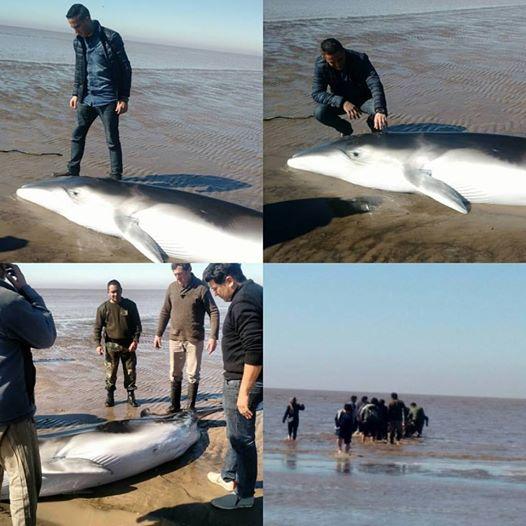 rescate ballena punta indio